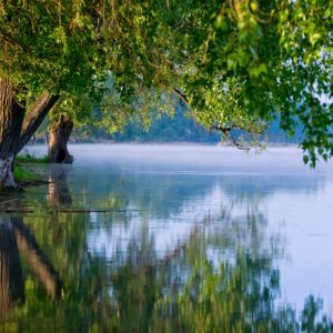 Дерево свисается над спокойной гладью озера