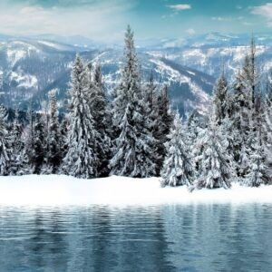 Ветки деревьев полностью в снегу