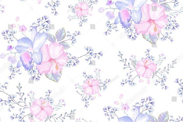 розовые орхидеи